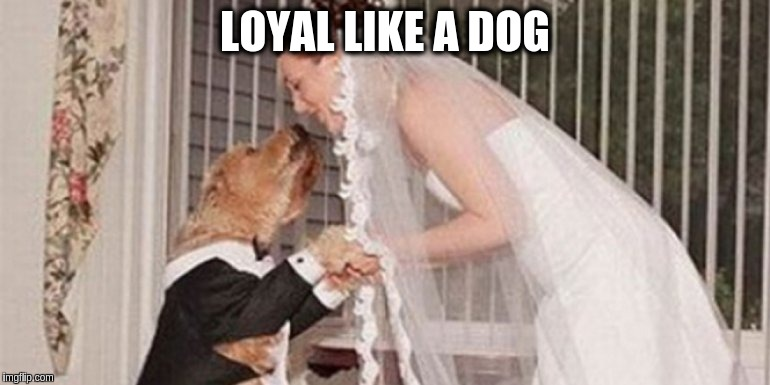 loyal-like-a-dog